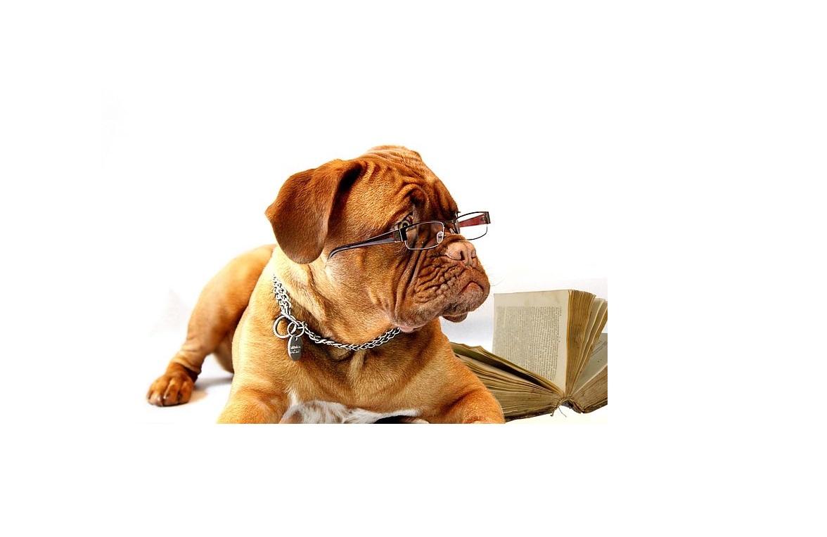 Dog Training 1to1